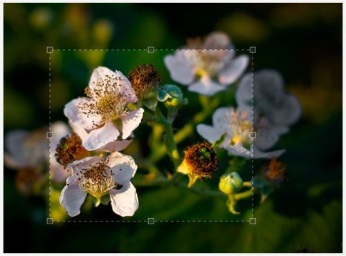 The jQuery Image Cropping Plugin-Jcrop