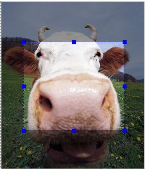 Mootools Image Cropping utility-MooCrop