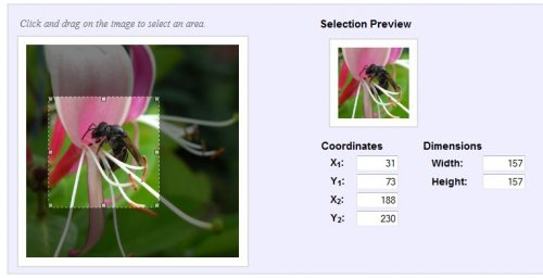 Select a rectangular area of an image to crop or apply effects. - imgAreaSelect